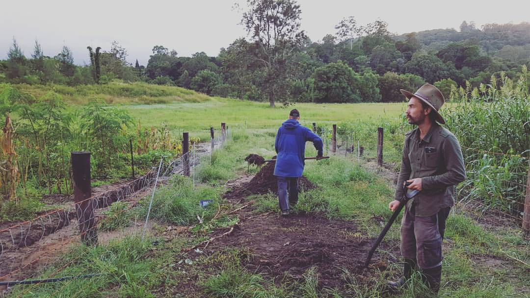Zaytuna farm interns turning the compost