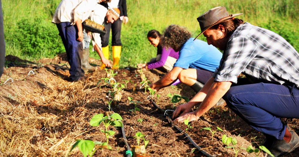 permaculture-in-action