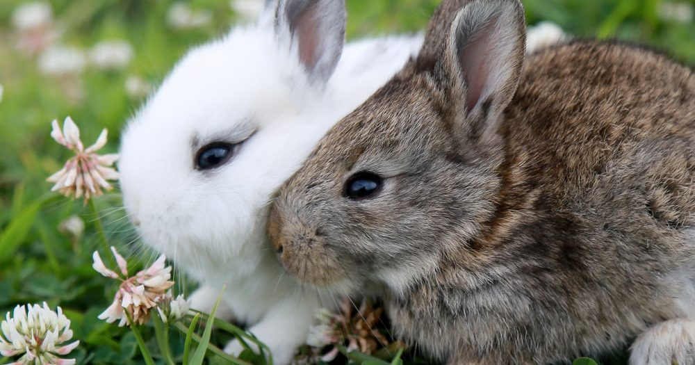 We have the cutest rabbits ever