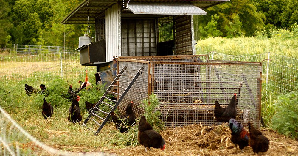 """The chicken tractor on steroids"""